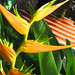 Sayulita Flower