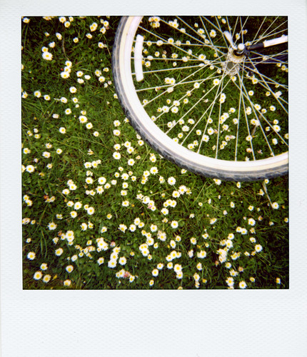 Bicycle wheel and tiny flowers