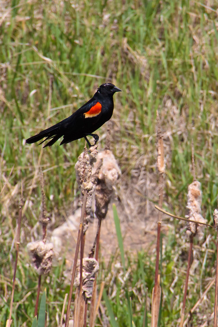 151.365 My Bird...