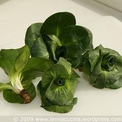 Cicoria verde Grumolo