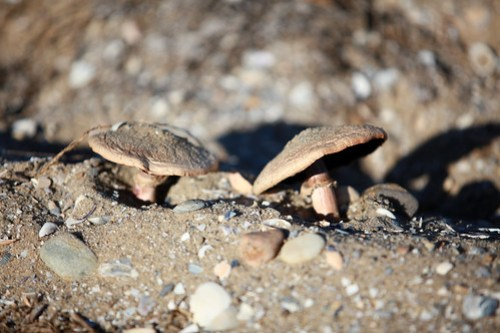 Mushrooms in the Sand