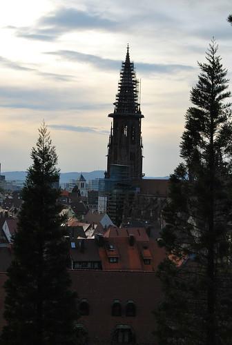 Münster trees