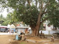Sri Navaneetha Krishnan Sri Lakshmi Narasimhar Temple 7