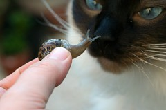 snailio inglesias meets otis