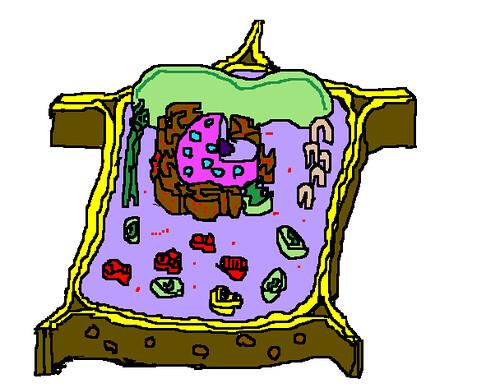 Clicca sulla cellula per conoscere le sue parti