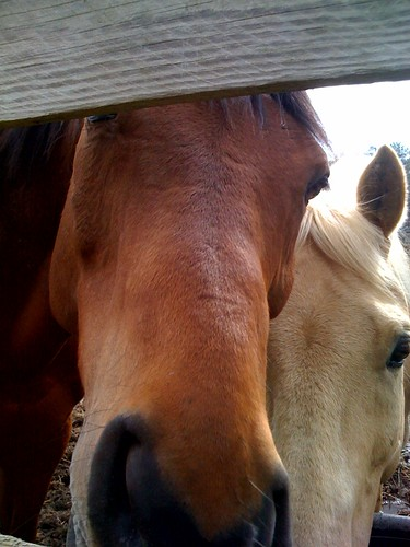 Nanny Cam for Horses