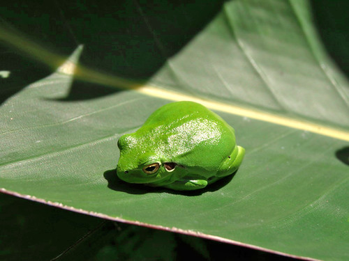 This guy sunbathing on a leaf