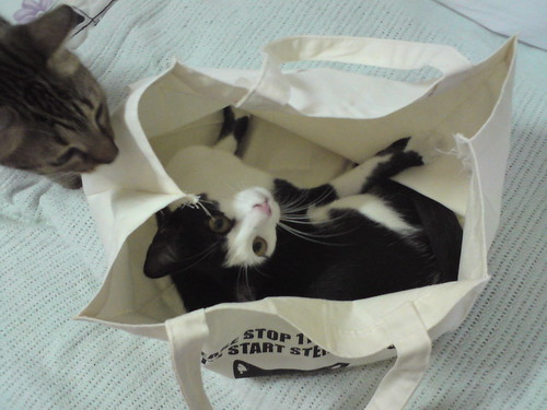 For Illustration Purpose Only, Bag doesnt come with Cat.  WARNING: DO NOT ATTEMPT TO USE BAG AS A PET CARRIER.