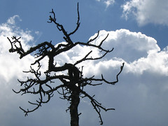 Tree, clouds, sky