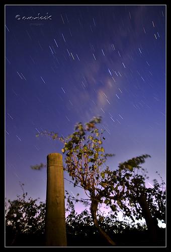 Starfall Rowland Flats