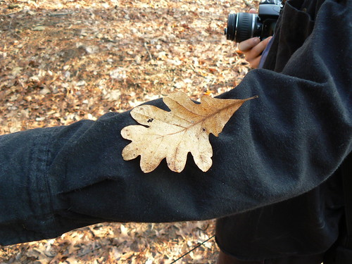 Fairystone State Park - Little Mountain Falls Trail - Neat Leaf