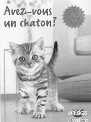 chaton-recto-2