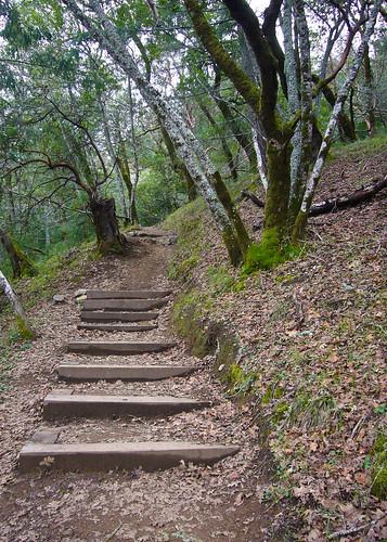 Shadyside Trail by you.