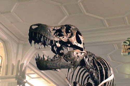 Image, Pupils got to meet Stan, the Museums very own T-rex
