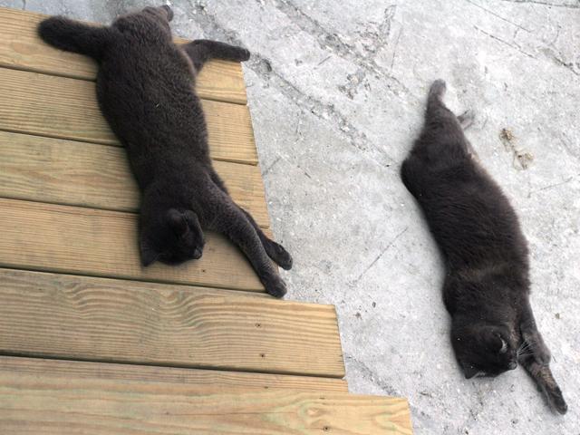 Cats-Sleep