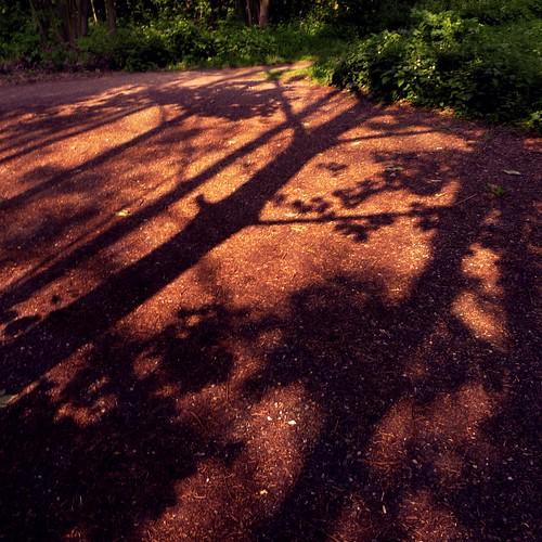 Les Ombres de la Forêt - Photo : Frederic Giet (Gilderic)