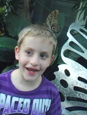 owl butterflies on your head