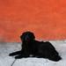 black Cerro Polanco dog 3
