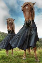 Clothes horses