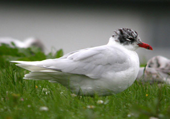 "Med Gull • <a style=""font-size:0.8em;"" href=""http://www.flickr.com/photos/30837261@N07/10723467403/"" target=""_blank"">View on Flickr</a>"