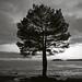 Kontur av ett träd