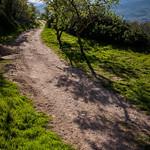 Sombras en el camino