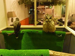 """Owl Cafe 5 • <a style=""""font-size:0.8em;"""" href=""""http://www.flickr.com/photos/66379360@N02/10588777496/"""" target=""""_blank"""">View on Flickr</a>"""