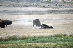 American Prairie Reserve 24