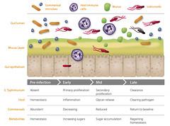 Salmonella Infection