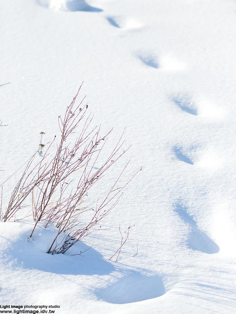 加拿大自由行&黃刀鎮極光 (圖多) - Mobile01