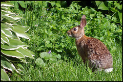 Garden Bunny 020-6x9