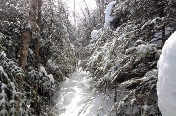 Upper Bondcliff Trail in Winter