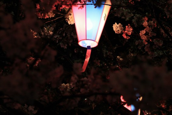 The lamp that illuminates the cherry blo by OiMax, on Flickr