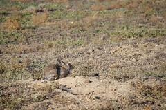 American Prairie Reserve 2
