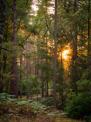 """Evening Light, Rafford • <a style=""""font-size:0.8em;"""" href=""""http://www.flickr.com/photos/26440756@N06/15208900437/"""" target=""""_blank"""">View on Flickr</a>"""