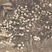 Flowering Bush Postcard