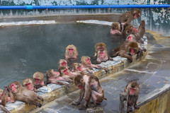 """Bathing monkeys • <a style=""""font-size:0.8em;"""" href=""""http://www.flickr.com/photos/63389963@N08/33240536795/"""" target=""""_blank"""">View on Flickr</a>"""