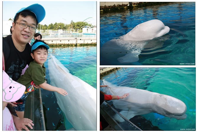 [日本.橫濱]橫濱八景島海島樂園~鯊魚、鯨豚第一次親密接觸 @VIVIYU小世界
