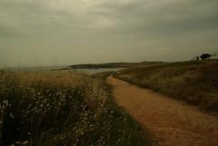 Sentier sur l'Île de Houat