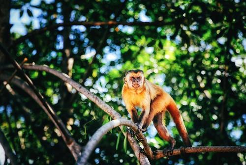 Tenda dos Macacos, Comunidade de Vassouras. Barreirinhas - Maranhão