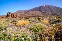 """Teide • <a style=""""font-size:0.8em;"""" href=""""http://www.flickr.com/photos/58574596@N06/15166242081/"""" target=""""_blank"""">View on Flickr</a>"""