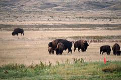 American Prairie Reserve 22