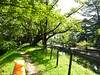 Photo:Slowbro in Shibata, Niigata 2 (Shibata castle) By