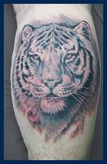 Tiger-B&G