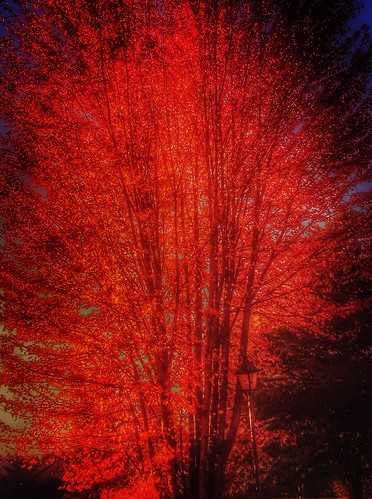 red tree automne iphoto iphone yvelines sonchamp iphoneografy iphoneographie gbillon