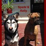 Spade & Kelly