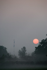 foggy sunrise.