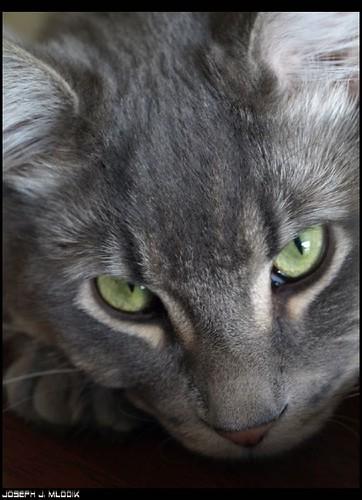 (Cat)harsis