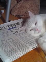 Mačka a WSJ