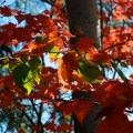Autumn leaves flickr photo sharing
